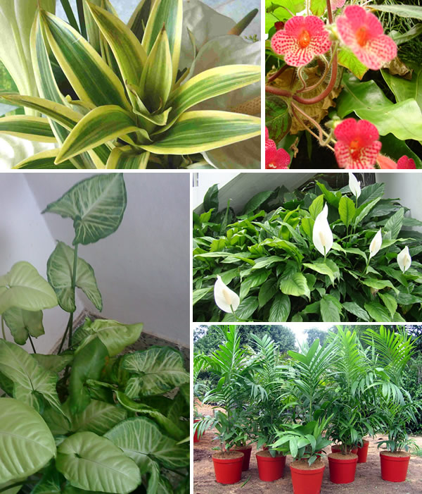 ideias jardim exterior:Plantas Para Dentro De Casa