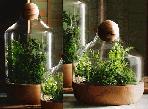 Mini florestas em vaso a moda dos terrários 01
